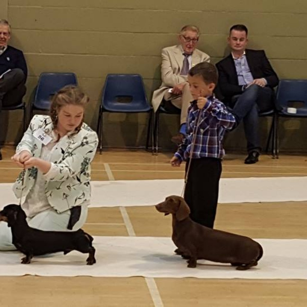 Junior Handling: Bryony Fossett with Lokmadi A Boy Named Sue We also had Kieron Alton taking part in 6-11 year olds and winning JH class with Kiersha That's Show Business